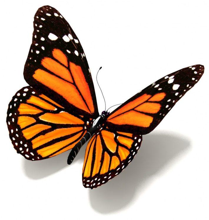 Pillangó minták